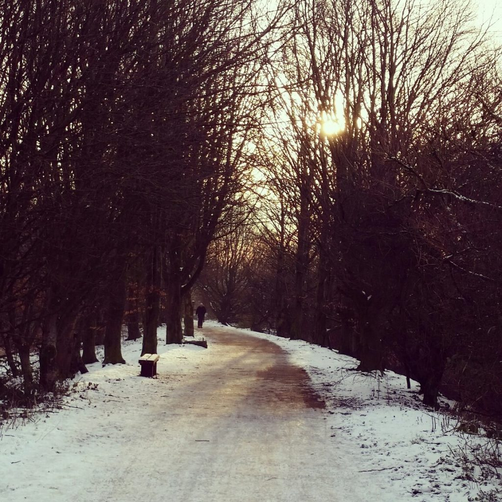 Lovely dog walk in the snow