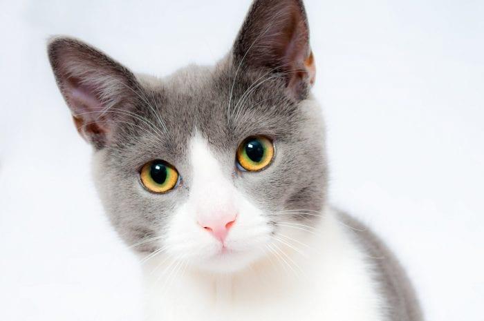 Ensure-your-pet-gets-TLC-at-Christmas-Cat