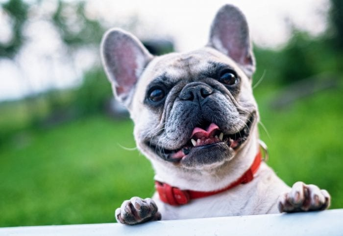 Ensuring Your Pets Get Enough TLC Over the Busy Festive Period