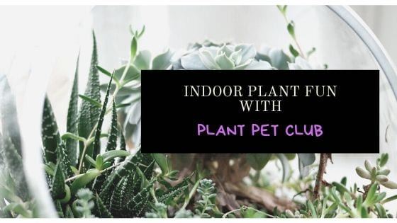Indoor Plant Fun With Plant Pet Club
