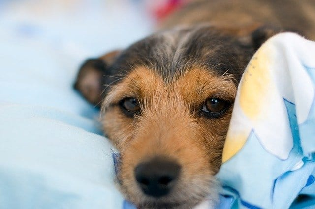 The benefits of Orthopaedic dog beds