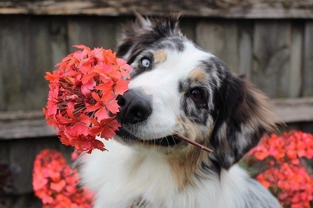 What Plants are Safe for Your Pets?
